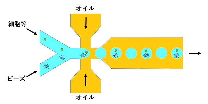ドロップレット RNA-Seq